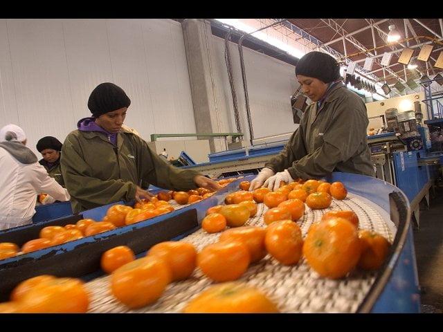 La mandarina lideró las demandas nacionales de cítricos en los tres primeros meses del año.