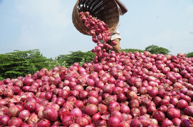 La cebolla peruana llegó hacia once destinos internacionales, siendo Estados Unidos el principal importador.