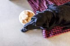 Fotos srperro.com / Emotivo: La historia de Duke, el último día de un perro que murió de cáncer