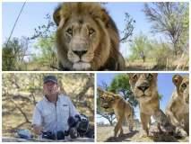 [VIDEO] Impresionante: Fotografió a 7 leones salvajes con vehículo rodante