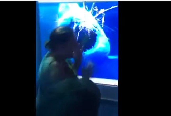 [VIDEO Youtube] Insólito: Un tiburón 'ataca' a una señora en un museo