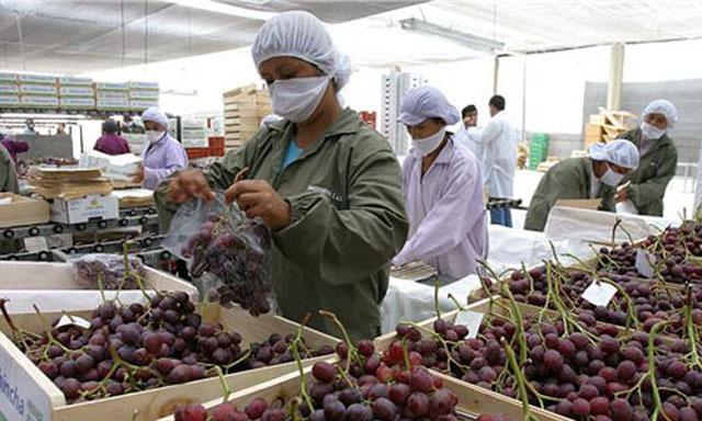La uva fresca fue el producto peruano con mayor demanda en Asia durante el primer trimestre.