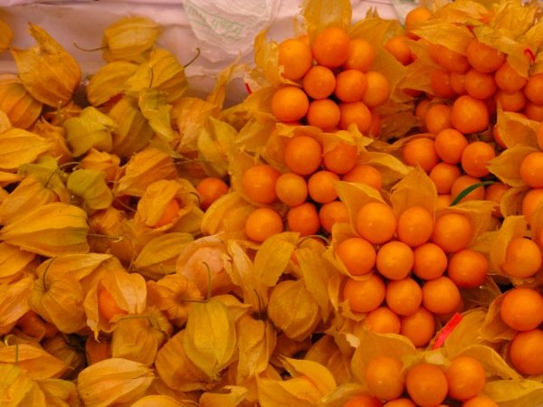 El aguaymanto es una fruta muy requerida en Europa y por ello MicroFood de Polonia desea adquirirla para realizarle pruebas a fin de convertirlas en snacks.