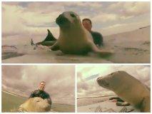 [VIDEO] Adorable: Cría de foca trepa y juega sobre tabla de surfistas