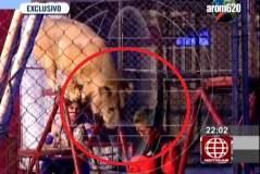 [VIDEO] Impactante: León ataca a profesora en circo y ante decenas de niños