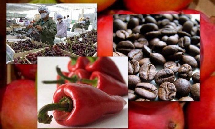 Los empresarios del subsector agroindustrial impulsaron los envíos internacionales de Lambayeque.