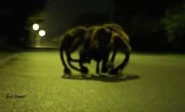 [VIDEO] Mira la broma del perro araña que alarmó a transeúntes
