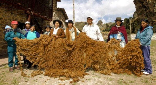 La lana de vicuña arequipeña se despachará a Italia.
