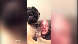 [VIDEO] Este perro llora cuando escucha canciones de Navidad