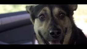 [VIDEO] Desgarrador: Activistas buscan que adoptes y no compres una mascota