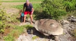 Interrumpe a tortuga en apareamiento y mira lo que pasó