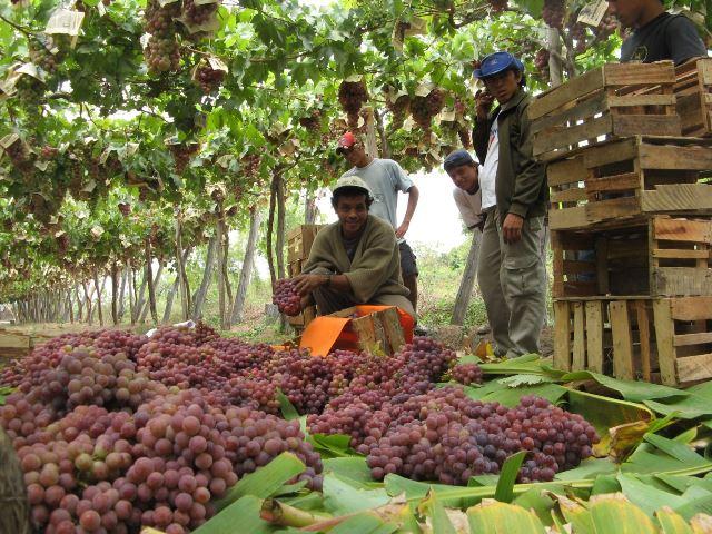 Los productos agrarios nacionales se direccionaron hacia 122 destinos internacionales.