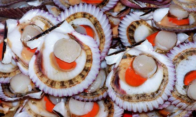 Las conchas de abanico continúan siendo el principal productos peruano exportado al mercado francés.