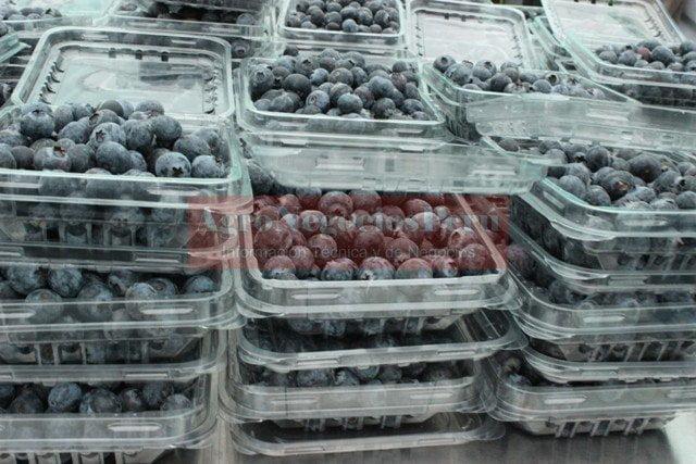 La calidad del arándano nacional continúa ganando mercado en el extranjero.