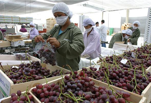 Las uvas fueron uno de los productos que lideraron los envíos agros nacionales.