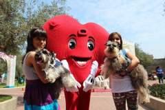 Día de San Valentín: habrá matrimonio masivo de mascotas