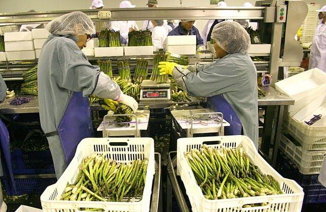 Los espárragos fueron uno de los principales productos agros direccionados a Suiza.