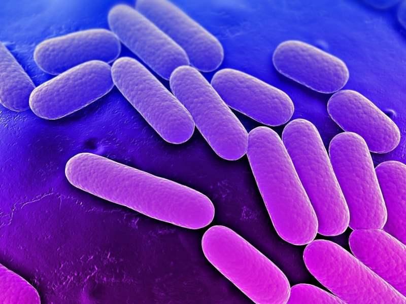 Bacteria resistente