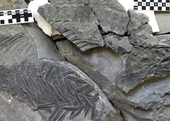 El fósil del extraño reptil