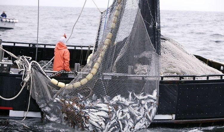 Las exportaciones pesqueras del Perú se incrementaron hacia el mercado ecuatoriano.