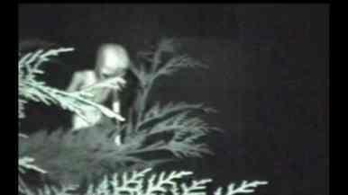 """[FOTOS] Imágenes de """"alienígenas"""" muy reales publicadas por History Channel"""