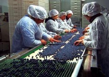 Los arándanos se encuentran dentro de las oportunidades que requiere el mercado canadiense.