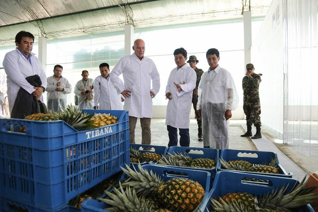 Mincetur: Productores del VRAEM exportarán 400 toneladas de piña Golden