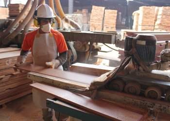 La madera se destinó principalmente a China.