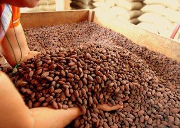 El cacao es uno de los principales productos No Tradicionales exportados al mercado surcoreano.