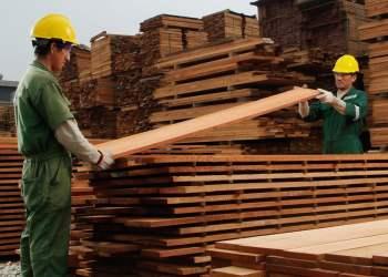 Madera aserrada generó negocios en el exterior por más de US$ 24 millones