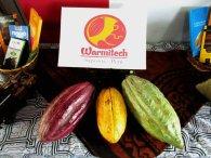Mujeres productoras de cacao lideran empresa de chocolatería