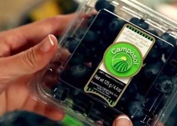La empresa Camposol fue la principal exportadora de arándanos entre enero y marzo.