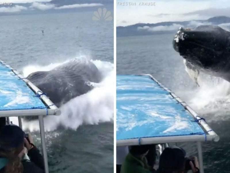 El terrible encuentro de turistas con ballenas jorobadas en Alaska