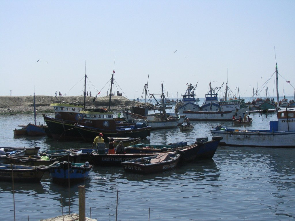 ADEX: Crece en 30% exportación de pesca para consumo humano directo