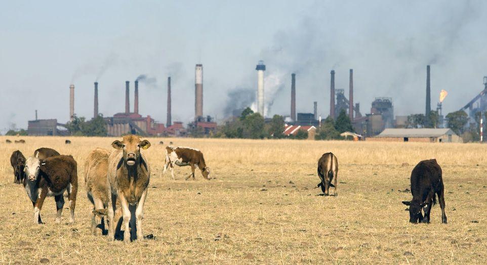 Banco Mundial/John Hogg Las industrias y la ganadería generan gases de efecto invernadero que causan el calentamiento global.