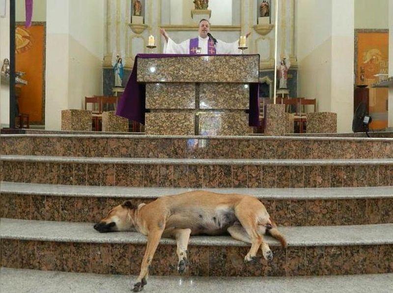 Sacerdote hizo misa a perros callejeros para que los adopten