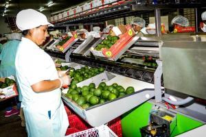Adex proyecta caída de exportaciones entre -26.4% y -34.4%