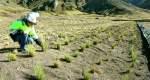 Activos Mineros culmina obras de remediación en proyecto Acobamba y Colqui en Lima