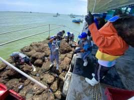 Sanipes: Pota, anchoveta, pulpo, calamar y conchas de abanico llegarán a mercado de Singapur