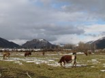 Vista desde camino a Alaska