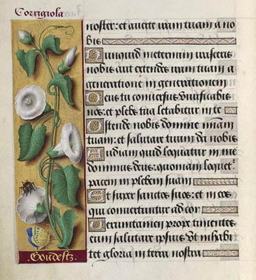 Grandes heures d'Anne de Bretagne - Folio 115 - Liserons.