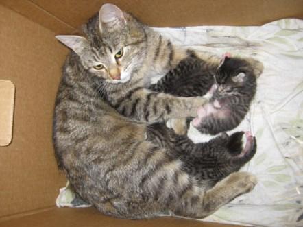 Mei-emo ja neljä pikkumeisseliä :)