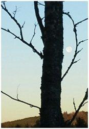 Mollukka keikkuu vielä auringon noustessakin taivaalla
