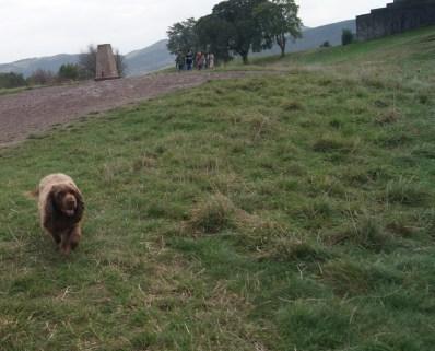 Esos perros escoceses