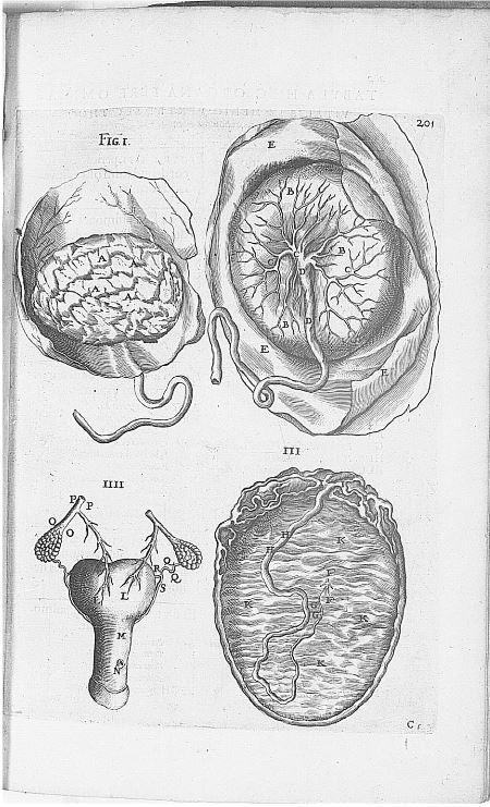 Illustration n°2 : L'utérus vu par le docteur André Du Laurens.