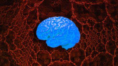 صورة علماء يكتشفون تشابهًا مدهشًا بين الشبكات العصبية والدماغ البشري