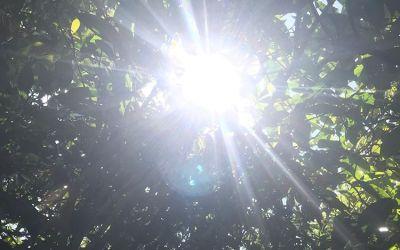 Tips Ampuh Melindungi Mobil Dari Paparan Sinar Matahari