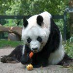新潟の公園にあるパンダの遊具が恐ろしすぎるwwww