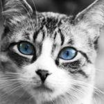 猫がキライすぎて、長篠の戦いみたいになってるマンションあった