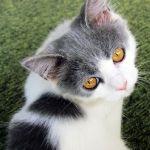 「アスファルトは冷たいニャ〜」あるネコが思いついた最高に暖かい場所が…!
